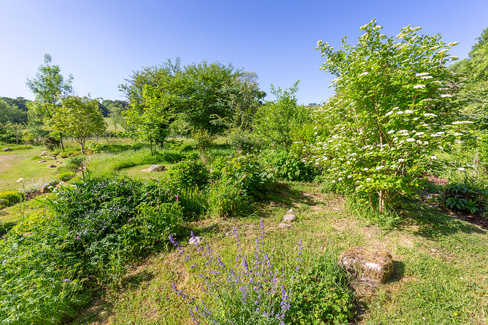 The Bala Brook land in May