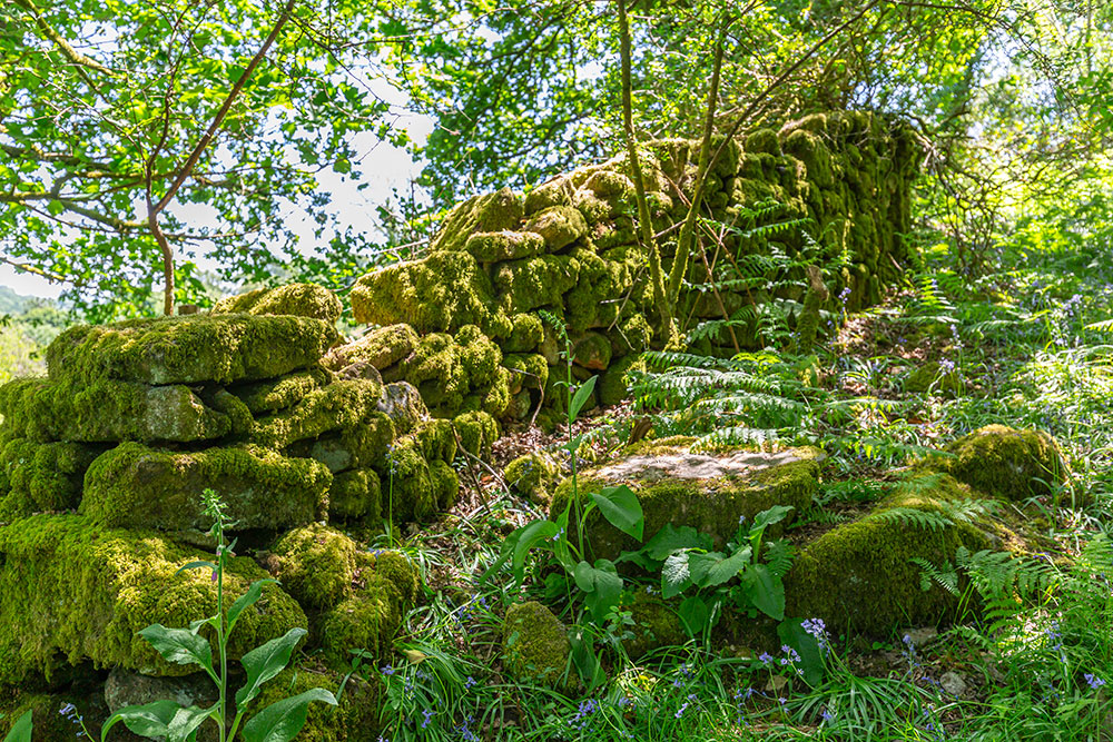 Mossy wall in May