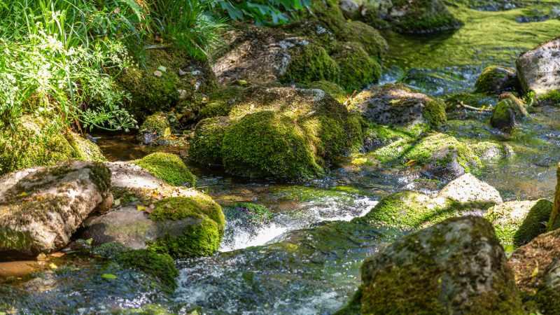 The Bala Brook